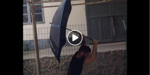 Umbrella 2017